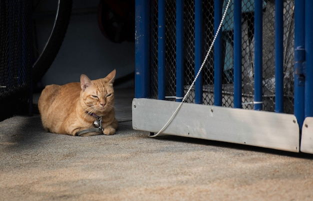 The cat was tethered.