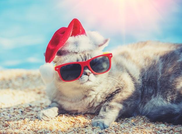 ビーチで横になっているサンタの帽子とサングラスを身に着けている猫