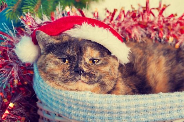 Кошка в шляпе санта в корзине на фоне рождества
