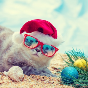 Cat wearing sunglasses and santa hat relaxing on the beach