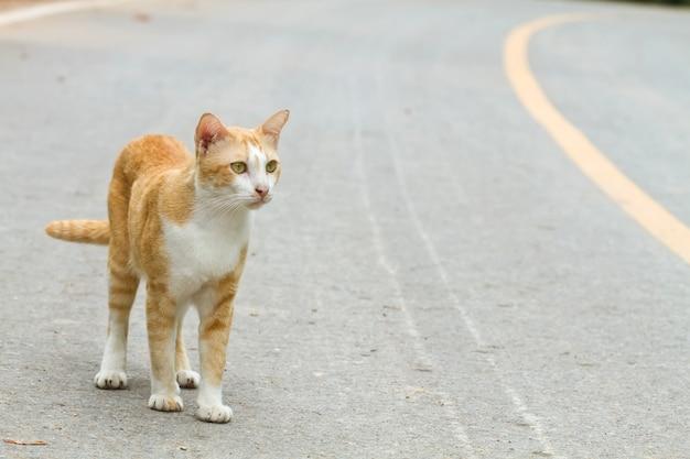 Cat white and yellow