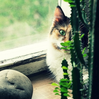 Cat on the windowsill behind a green cactus