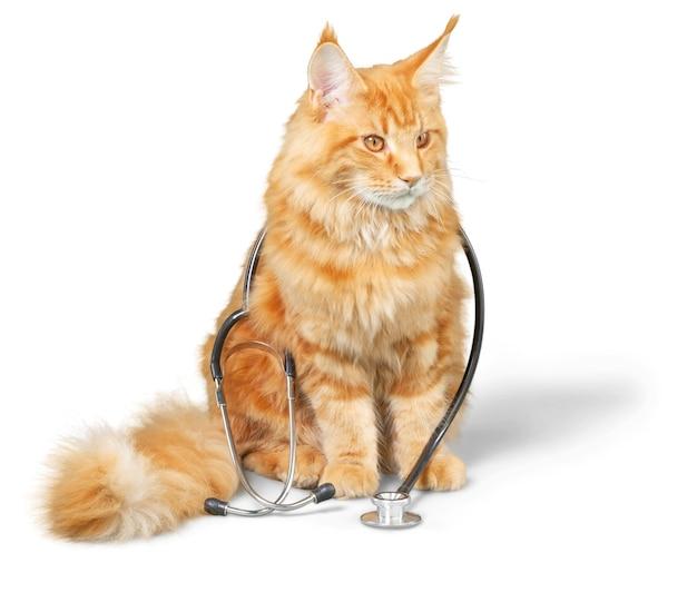 그의 목에 청진 기를 가진 고양이입니다. 카메라를 보고 있습니다. 흰색 배경에 고립