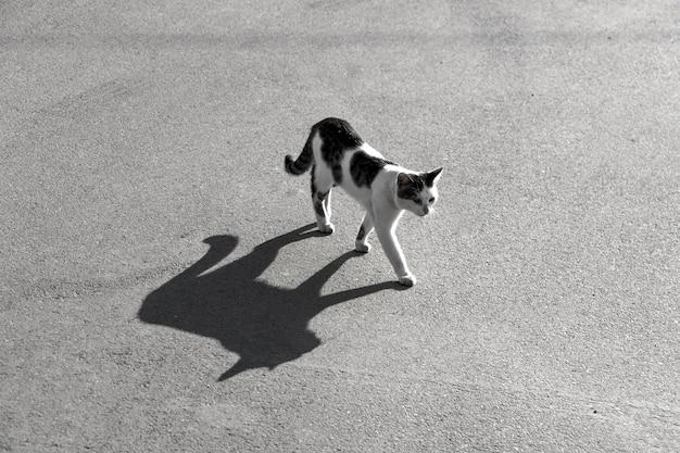 アスファルト道路に大きな影のある猫。黒と白のストックフォト