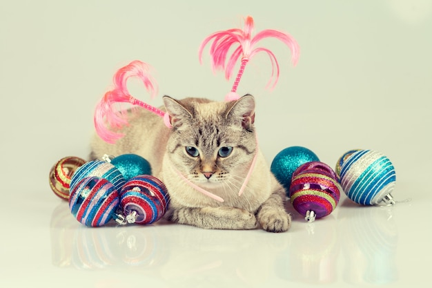 Кошка с рождественским украшением