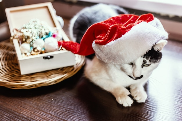 Cat with a christmas hat. new year and christmas concept