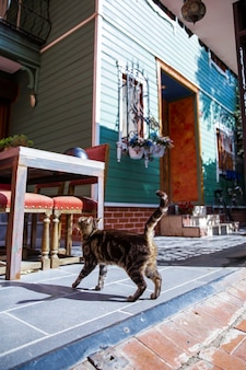 이스탄불, 터키의 창문, 계단 및 주차 된 자전거에 꽃이있는 주거용 건물 입구가있는 고양이