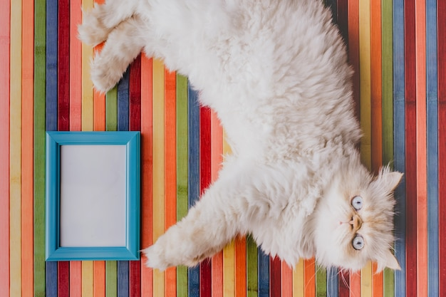 Cat with a frame as a background