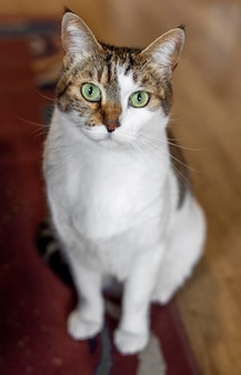 Cat with green eyes indoors