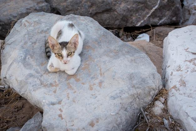 Gatto con gli occhi verdi seduto su una pietra