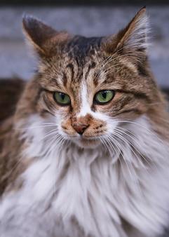 녹색 눈을 가진 고양이