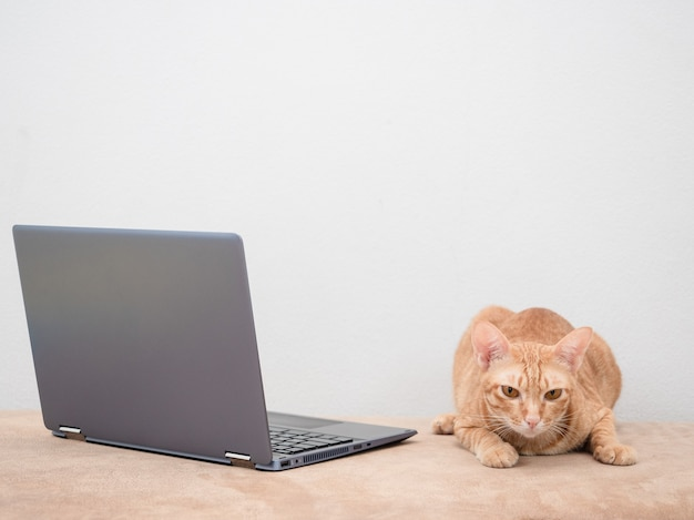 Cat with laptop on sofa on white background at home