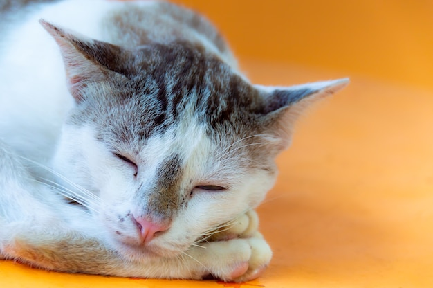 Cat with a light brown color are sleeping with orange background.
