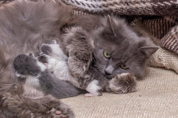 生まれたばかりの子猫と猫、猫は子猫を養う