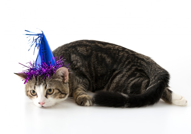 파티 모자와 고양이