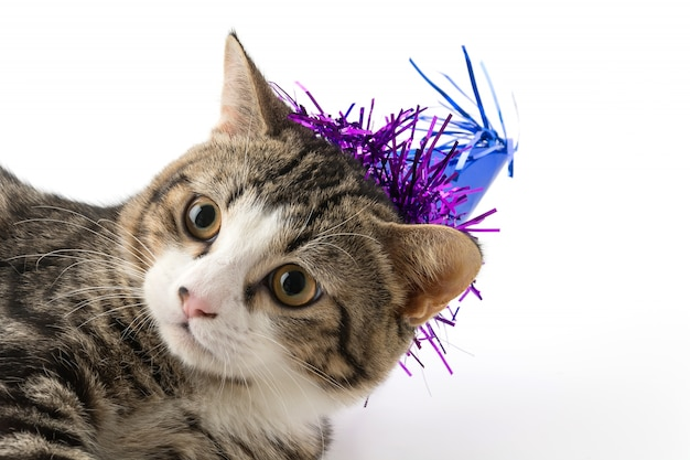 Cat with party hat