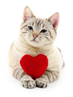 Cat with red valentine`s heart isolated