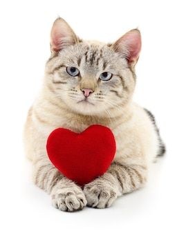 Cat with red valentine`s  heart on white