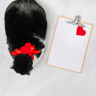 Cat with ribbon near clipboard and ornament heart