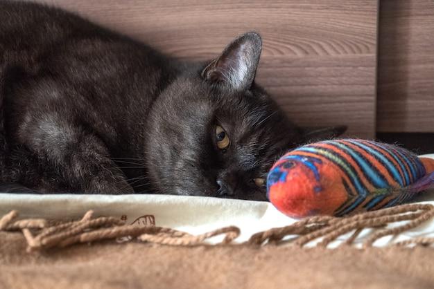 Кот с грустными глазами лежит на кровати возле своей игрушечной рыбки