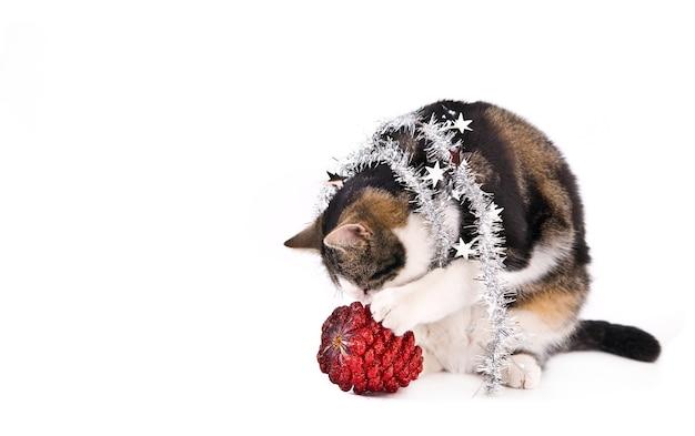 クリスマスの松ぼっくりに触れる銀の花輪を持つ猫。白で隔離。