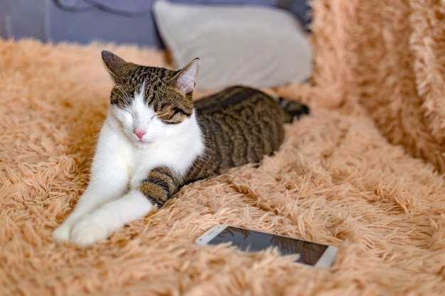 Cat with smart phone lying on a sofa in living room, close up