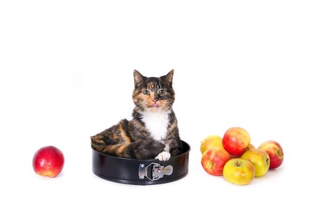 リンゴとリンゴのパイ缶に舌を持った猫。