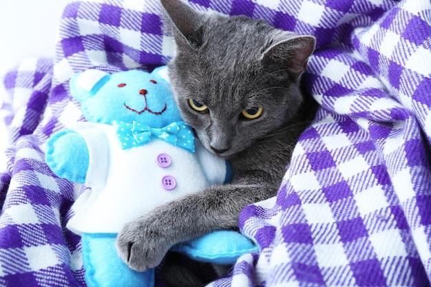 紫の毛布のクローズ アップにクマのぬいぐるみを持つ猫