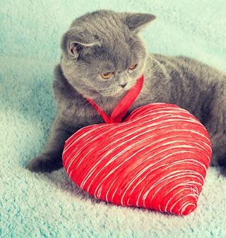 Кот с игрушечным сердечком