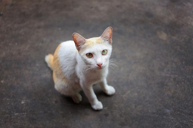 ぼやけた茶色の背景に白と金色の猫
