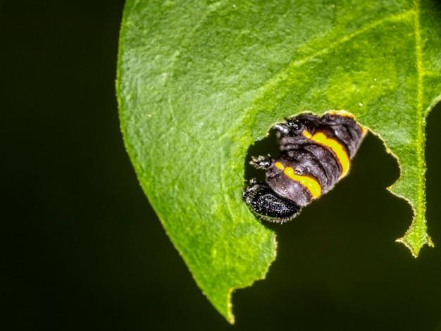 나무에 잎을 먹는 애벌레.