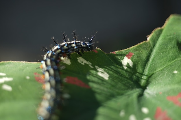 Caterpillar on the leaes