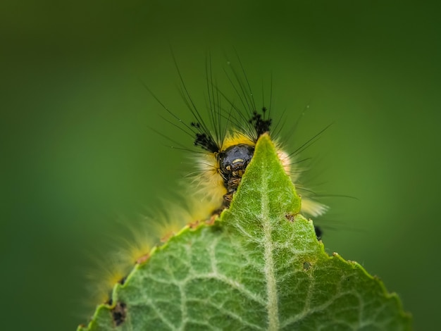 녹색 잎에 애벌레