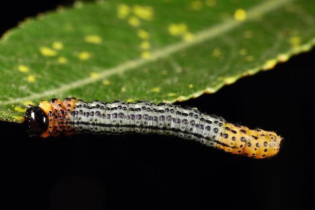 잎에 애벌레