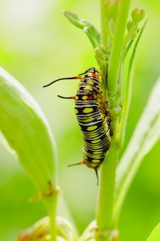 木の上の毛虫。花の幼虫。葉の上の毛虫