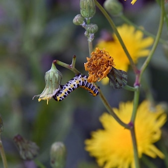 노란 꽃에 애벌레