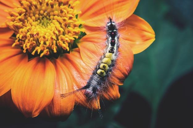 Caterpillar на цветы