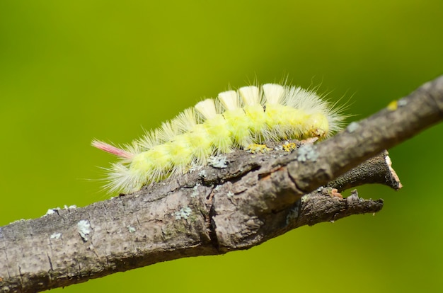 Caterpillarは障害を克服して食料を見つける