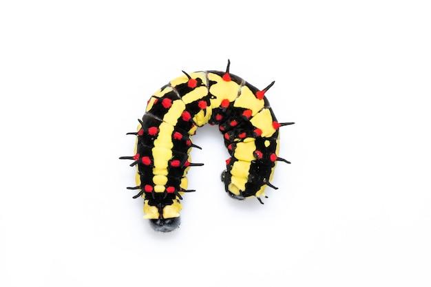 고립 된 일반적인 mime의 유충. 동물. 곤충.