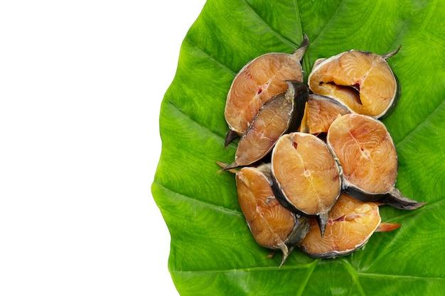 메기는 녹색 잎에 조각을 잘라
