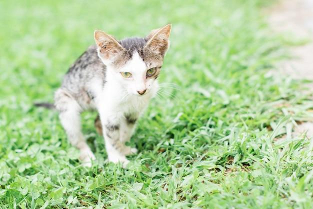 路上に捨てられた猫、動物虐待、孤独