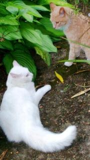 Cats fight standoff