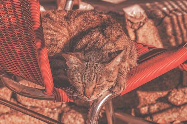晴れた朝のカフェで猫