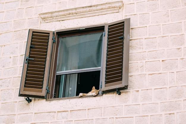 몬테네그로의 고양이. 몬테네그로는 고양이의 나라입니다.