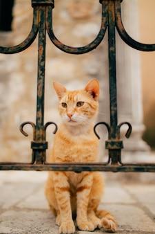 モンテネグロの猫