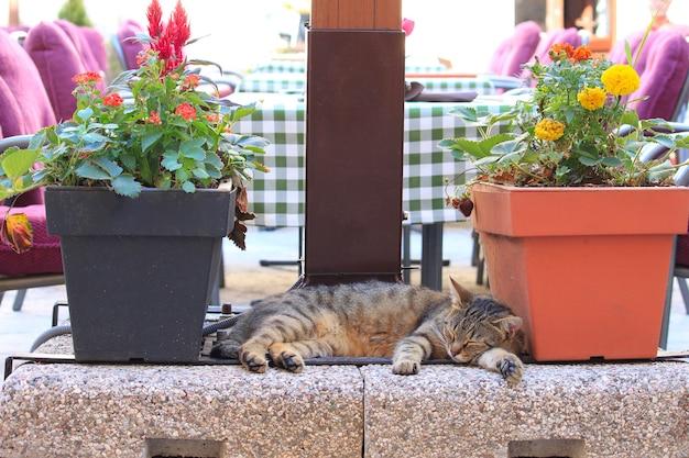 モンテネグロの旧市街コトルの猫。