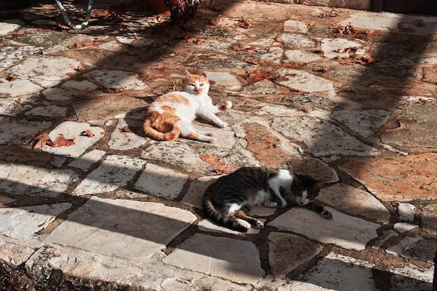 Кошки в монастыре в деревне монагри, кипр