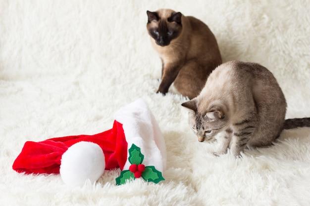 猫はクリスマスプレゼントを探しているサンタの帽子タイの猫を調べます