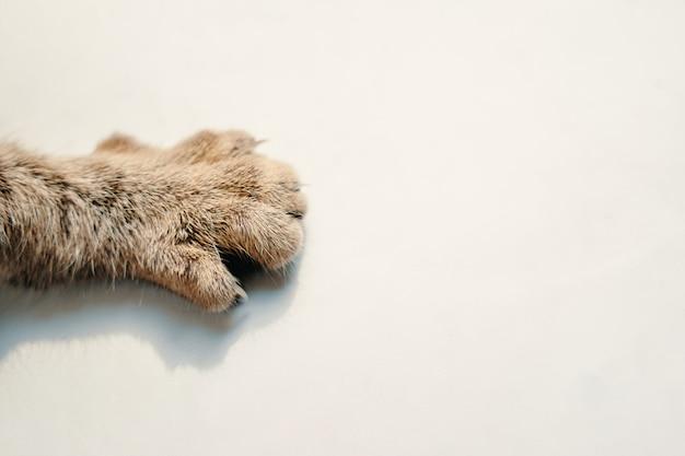 흰색 배경에 고양이 발 애완 동물의 발 다리에 솜털 줄무늬 모피 복사 공간을 닫습니다