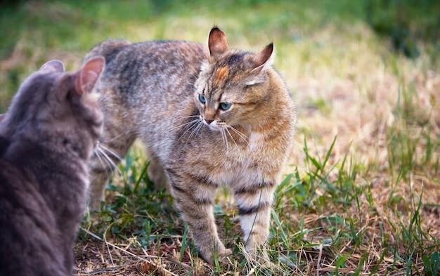 고양이는 정원에서 잔디에서 놀고
